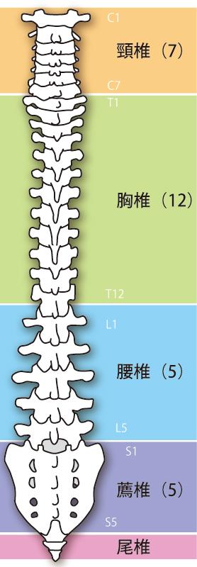 当院の坐骨神経痛へのアプローチは?