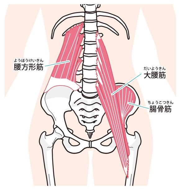 筋肉の衰えがギックリ腰の原因になります。